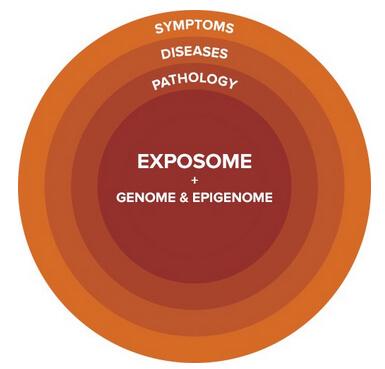 exposome   genome copy